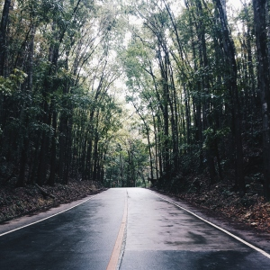 Manmade Forest - Bohol, Philippines